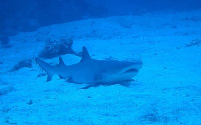 Ocean Gardener 4 – 9 Tips to Help Protecting Sharks
