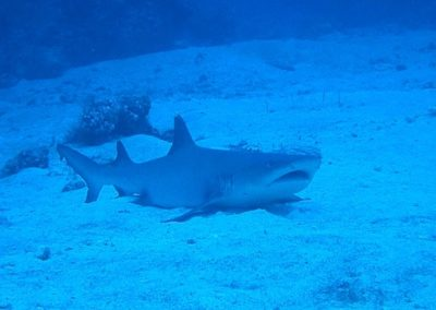 Ocean Gardener 4 – 9 Tips to Help Protecting Sharks