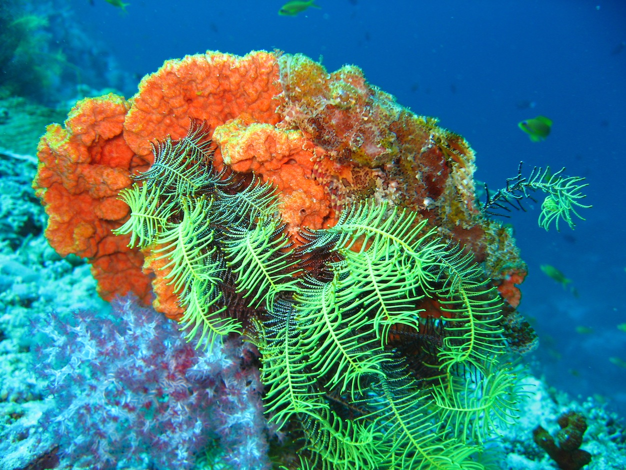 Ocean Gardener 3 – 11 Tips To Start Helping Coral Reefs Right Now