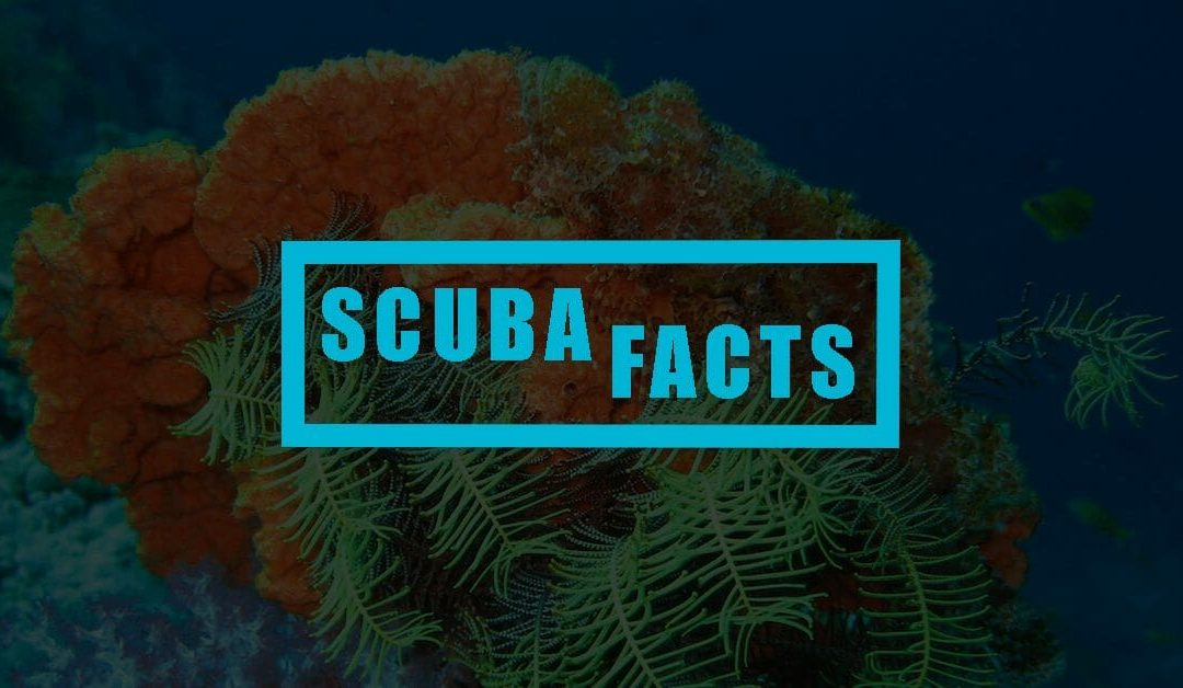 15 Curious Scuba Diving Facts You Most Probably Don't Know