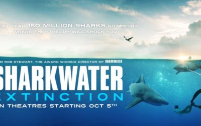 Good News – Sharkwater 2 Will Be Completed
