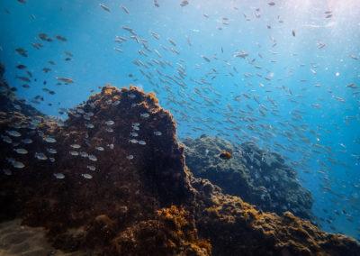 Lanzarote – A Top Diving Destination in Europe